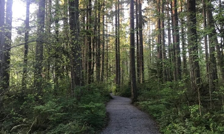 Loop trail around the lake